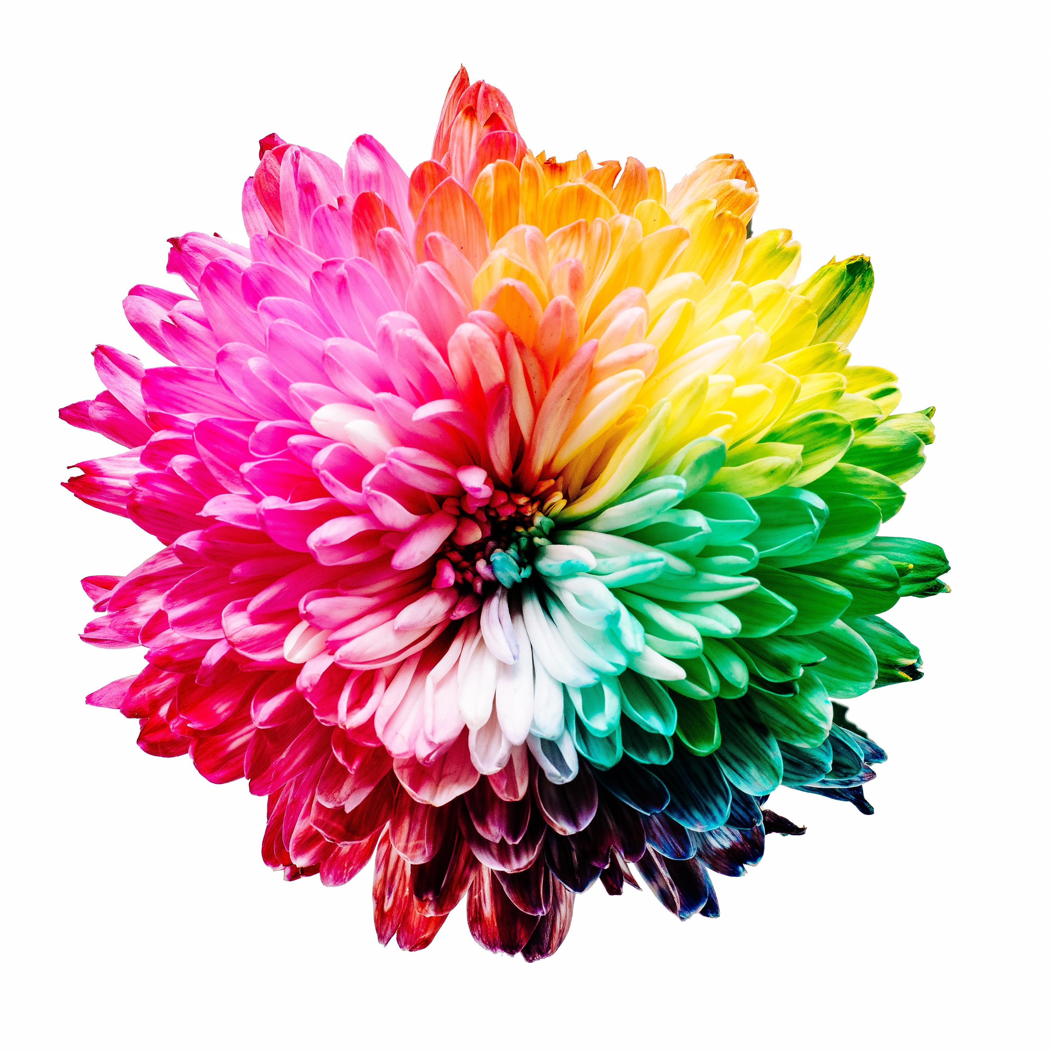 Regenbogenfarbene Blüte